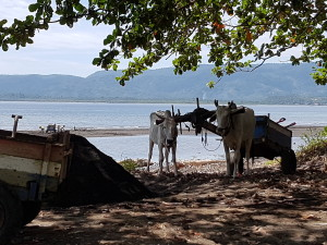 belevenissen van onze gasten: locals op het strand